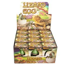 48 Bulk Growing Pet Lizard Eggs