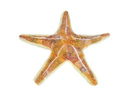 24 Bulk Wild Republic Plush Orange Glitter Starfish