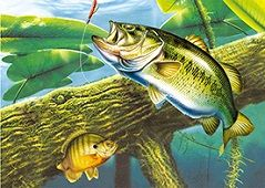 40 Bulk 3D Picture Bass in Water