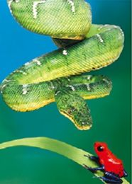 40 Bulk 3D Picture Green Snake With Red Frog