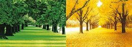 40 Bulk 3D Picture Spring Trees Autumn Trees