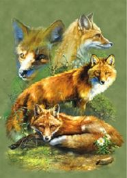 40 Bulk 3D Picture Red Fox
