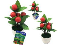 72 Bulk 5 Head Apples In Flower Pot