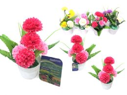 72 Bulk Carnations In Pot 6 Head